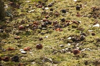 Dead apples
